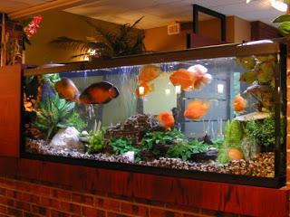 acuario-fotografia-enorme-1