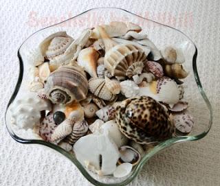 blog-seashells-by-millhill-1