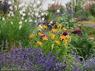 Taglilie im Garten
